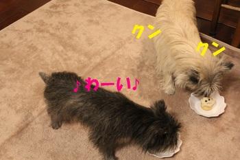 12.3 (4).JPG