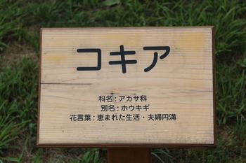 9.5 (4).JPG